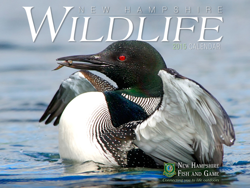 2015 fish and game calendars available now londonderry news for Wildlife fish and game