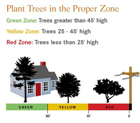 Plan before you plant this spring londonderry news - Fir tree planting instructions a vigorous garden ...